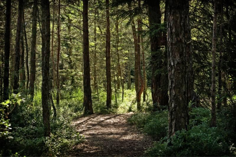 Confrontez-vous à la nature en organisant une randonnée au bois de Serres.